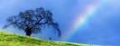 Regenbogen_1