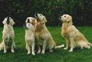 Unsere Hunde 11