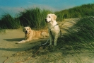 Unsere Hunde 12