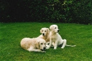 Unsere Hunde 13