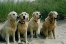 Unsere Hunde 2