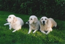 Unsere Hunde 3