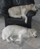 Unsere Hunde 4