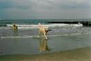 Unsere Hunde 5