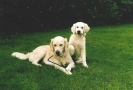 Unsere Hunde 6