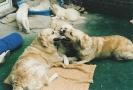 Unsere Hunde 7