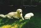 Unsere Hunde 8