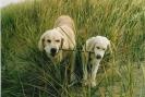 Unsere Hunde 9
